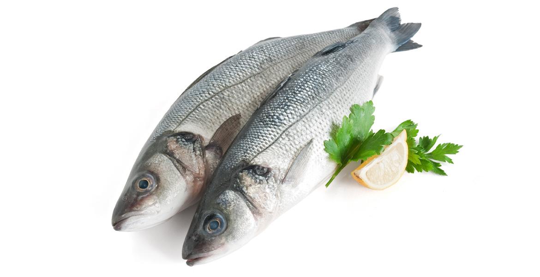 Branzino o spigola mercato ittico chioggia chioggiapesca for What is branzino fish