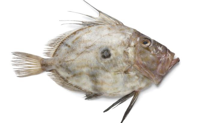 (Italiano) Pesce San Pietro
