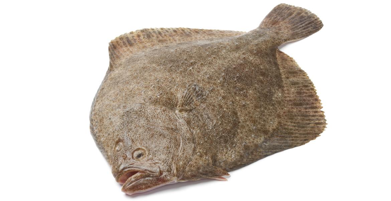 Risultati immagini per rombo pesce
