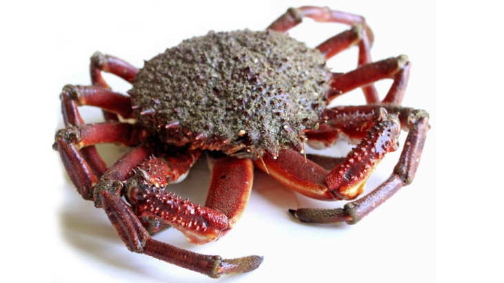 (Italiano) Crostacei
