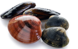 (Italiano) Frutti di mare in gravidanza: si possono mangiare senza problemi?