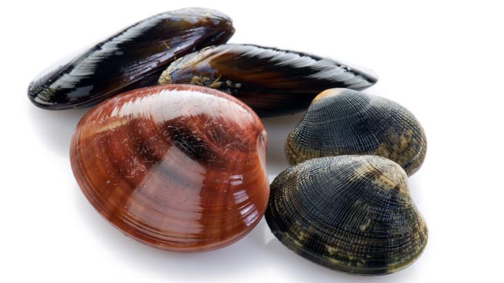 Frutti di mare in gravidanza: si possono mangiare senza problemi?