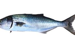 (Italiano) Pesce serra