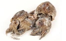 Mercato ittico chioggia chioggiapesca vendita prodotto ittico - Pesci comuni in tavola ...