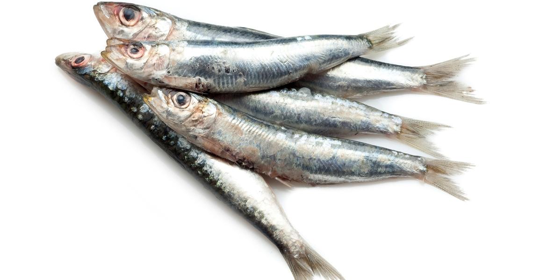Risultati immagini per sardina