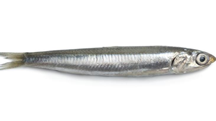 Il pesce azzurro e salute